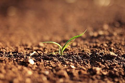 Vysoušení kalů z odpadních vod nebo odpadu živočišného původu pro zúrodňování půdy